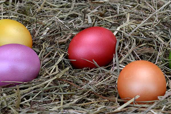Coloured Easter eggs on straw