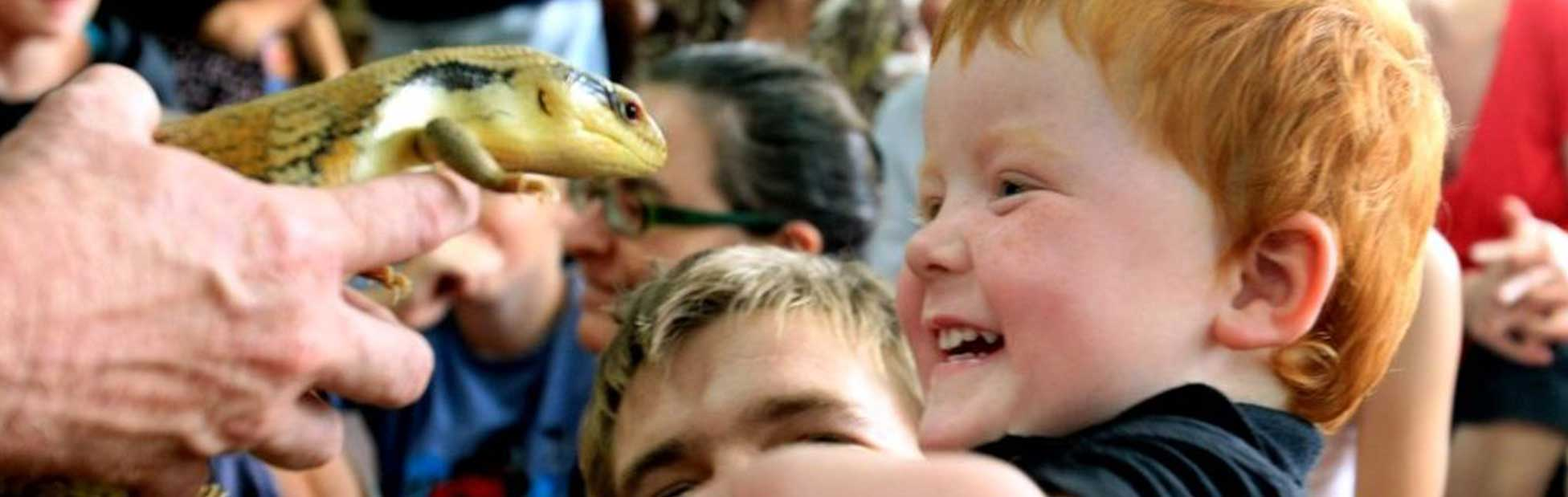 Boy looking at reptile
