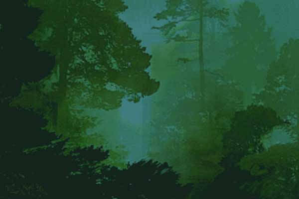 Green tinted forest silhouette